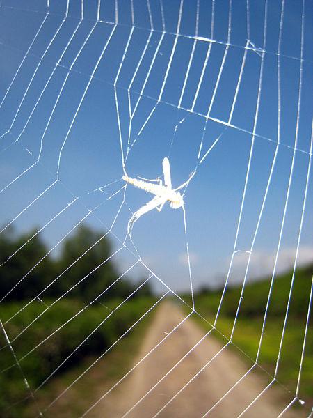 450px-bug_in_spider_web.jpg