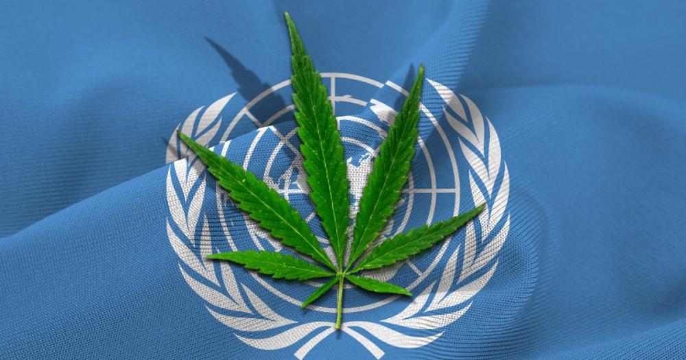La ONU reconoce las propiedades terapéuticas del cannabis y la retira de la lista de sustancias peligrosas