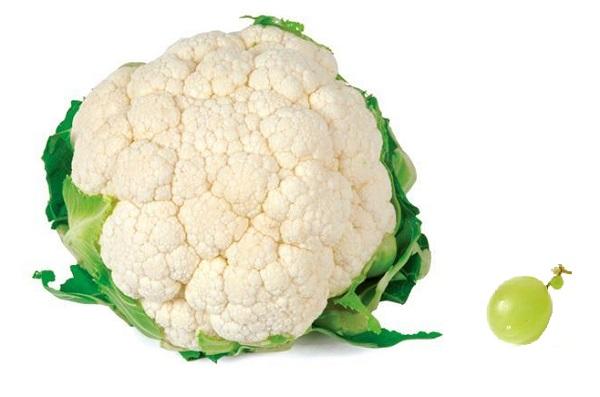 quelle quantité de fruits et légumes par jour