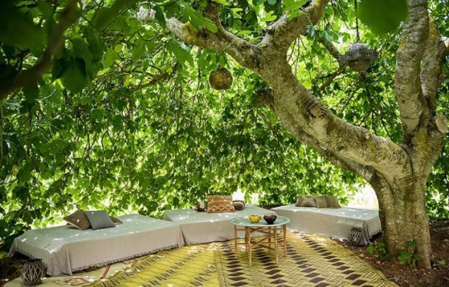 // Soon we will have our lush fig tree again with all its leaves 🍃 best summer chill out in the cooling shade // #lascicadasibiza #magic #lush #figtree #chillout #summer #ibiza #campolove #rustic #finca #ibizastyle #stylish #interiors #exteriors #holidayhome #ibiza2018 #mediterranean #bliss #vacation #destination #islandlife #goodlife