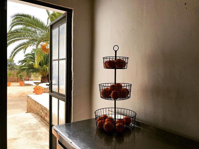 🍊 #citrus #vitaminc #naranjas #ibizencas #mediterranean #garden #freshojeveryday #lascicadasibiza #boutiquevilla #kitchenview #holidayhome #santagertrudis #ibiza 🍊🌴