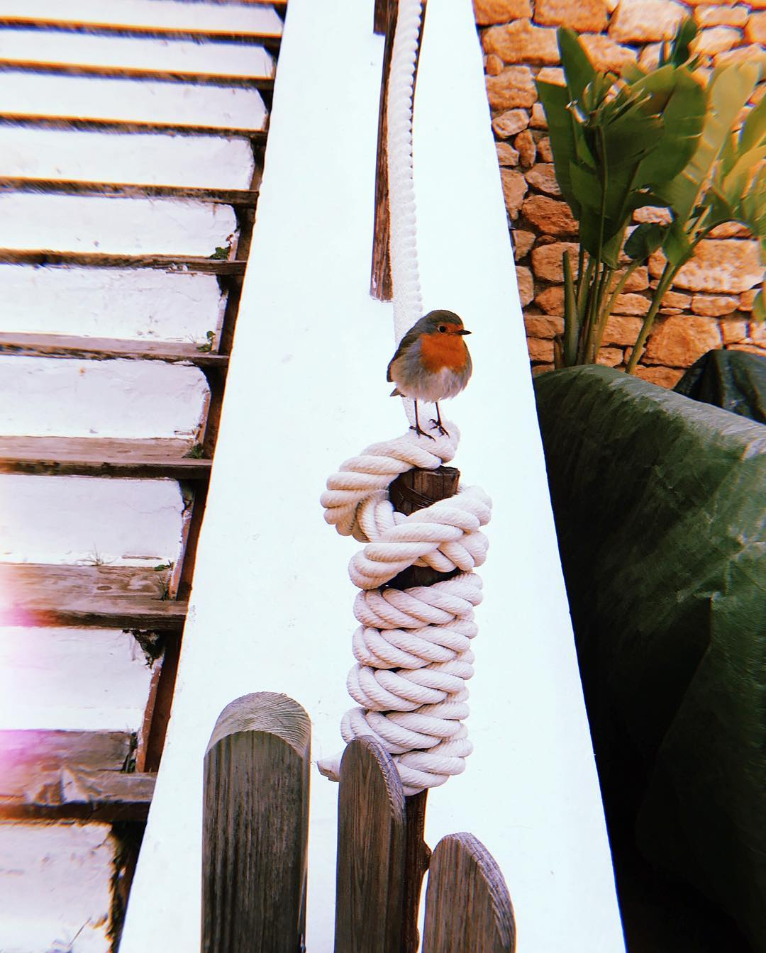 // Cute Visitor // #lascicadasibiza #robin #bird #freespirit #nature #campo #animals #mediterranean #january #calm #winter #season #guests #country #home #ibiza #finca #boutiquevilla 🕊🧡