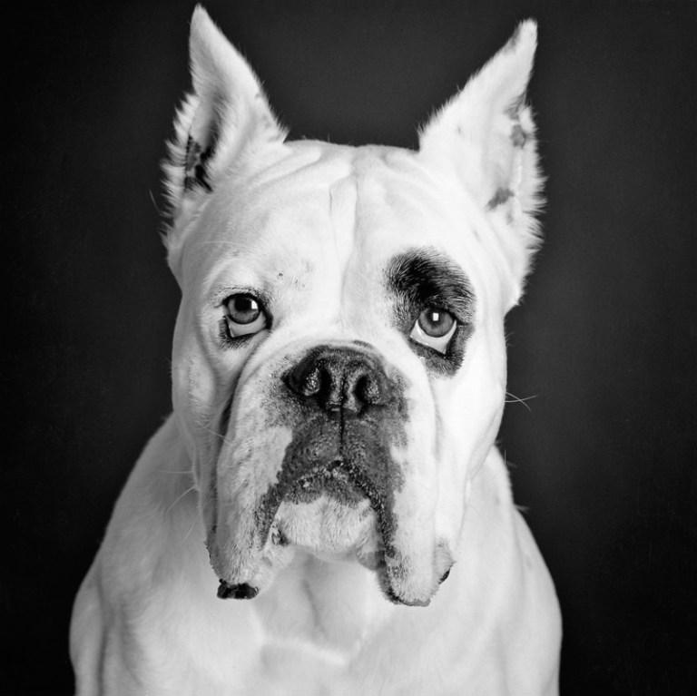 perro-3