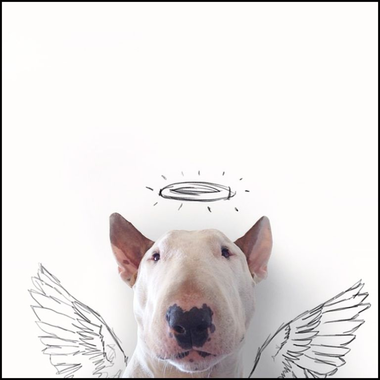 bull-terrier-illustrations-rafael-mantesso-IIHIH-hero
