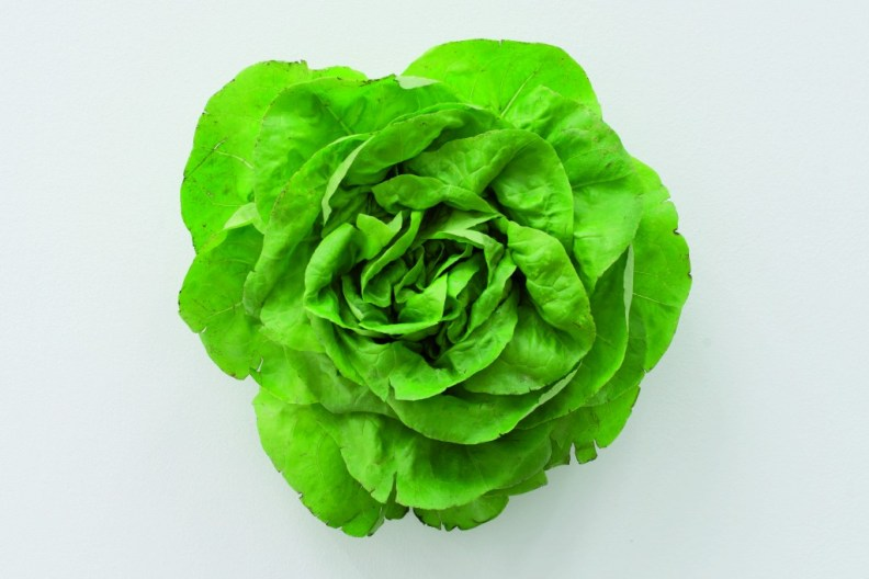 Karin-Sander.-The-Head-Lettuce-2012-2016-1024x6832
