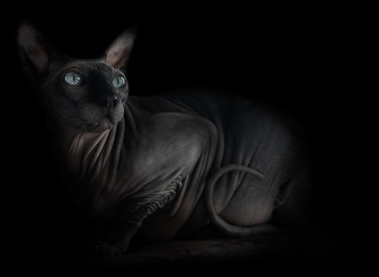 sphynx-cat-photos-by-alicia-rius-7