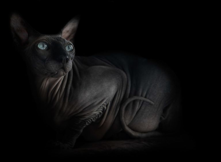 sphynx-cat-photos-by-alicia-rius-7