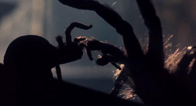 Aracnofobia, las arañas.