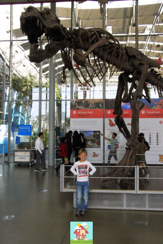 Questa immagine ha l'attributo alt vuoto; il nome del file è Science-Museum-San-Francisco-35-683x1024.jpg