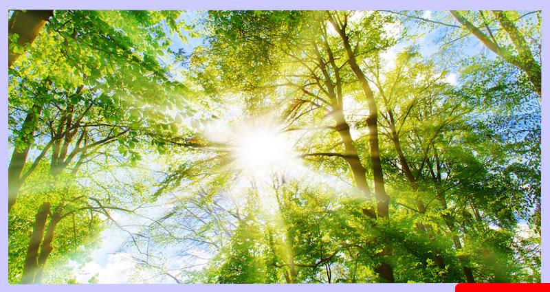 8 Razones por Las Que Debes de Tomar Sol