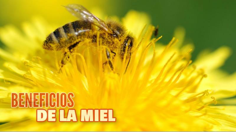 Beneficios Para La Salud De La Miel