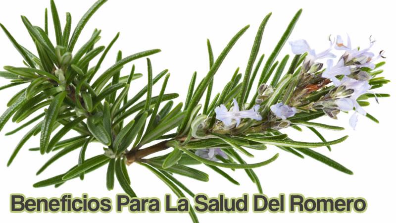 Beneficios Para La Salud Del Romero