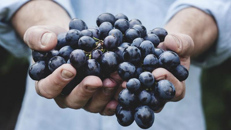 Los Increibles Beneficios del Zumo de Uva Para la Salud