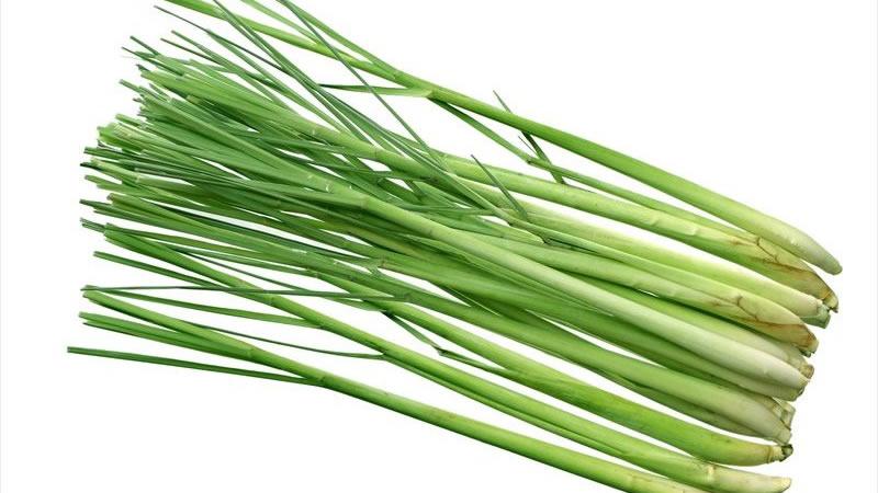 Los 10 Mejores Beneficios Para La Salud De La Hierba De Limón