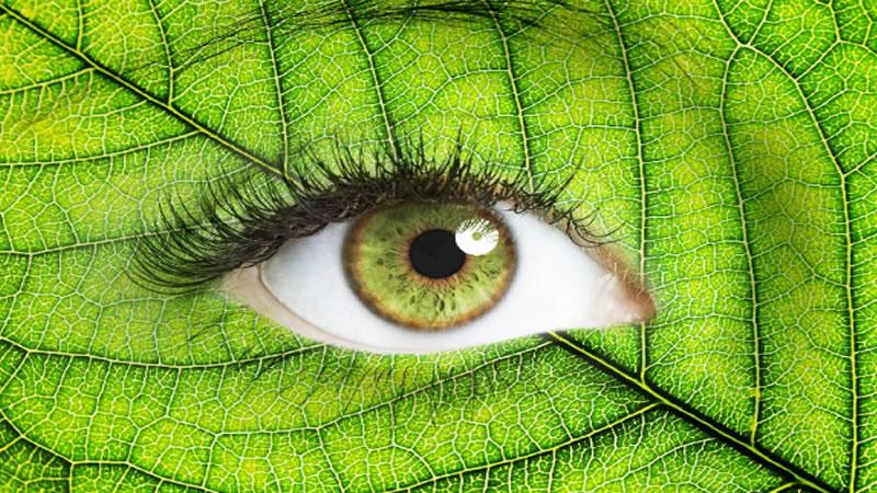 Los Mejores Alimentos Para La Salud de Los Ojos