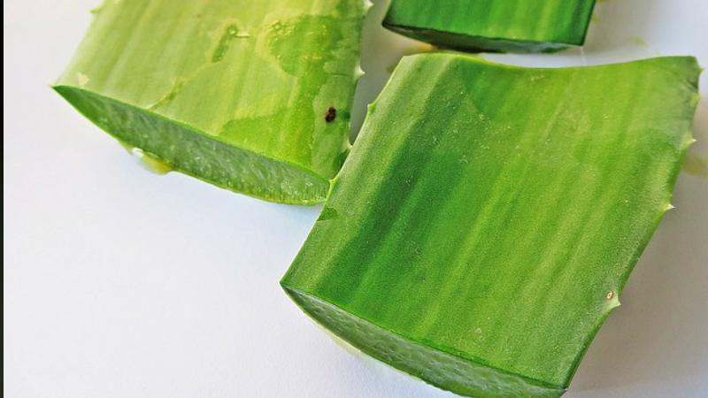 Aqui están las 7 Razones Por El Cuál Debes Tomar Aloe Vera Todos Los Días