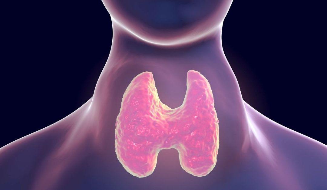 Un desequilibrio de la hormona tiroidea puede causar aumento o pérdida de peso