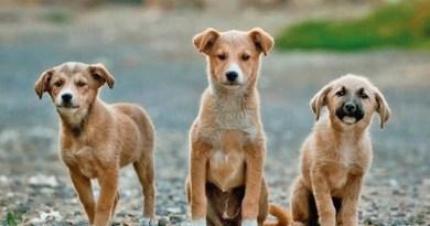Actualización de los servicios de bienestar animal de Tulsa / Tulsa Animal Welfare Services Update
