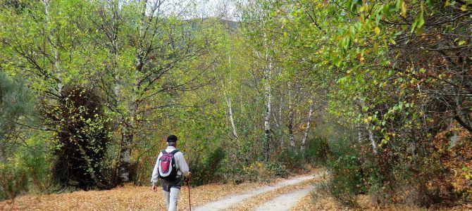 Un paseo por Tejedo del Sil