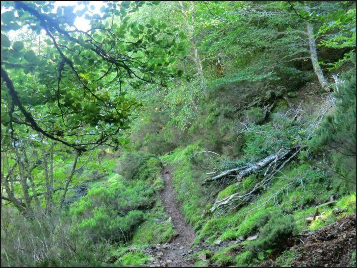 El único tramo forestal de la ruta