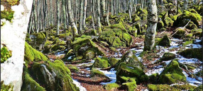 Bosque y braña de Gumial – Aller