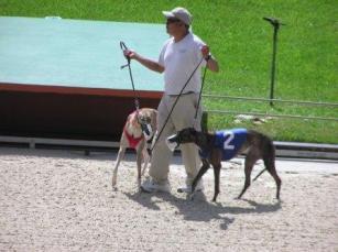 Greyhound Laser Therapy