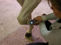 Equine lazer therapy