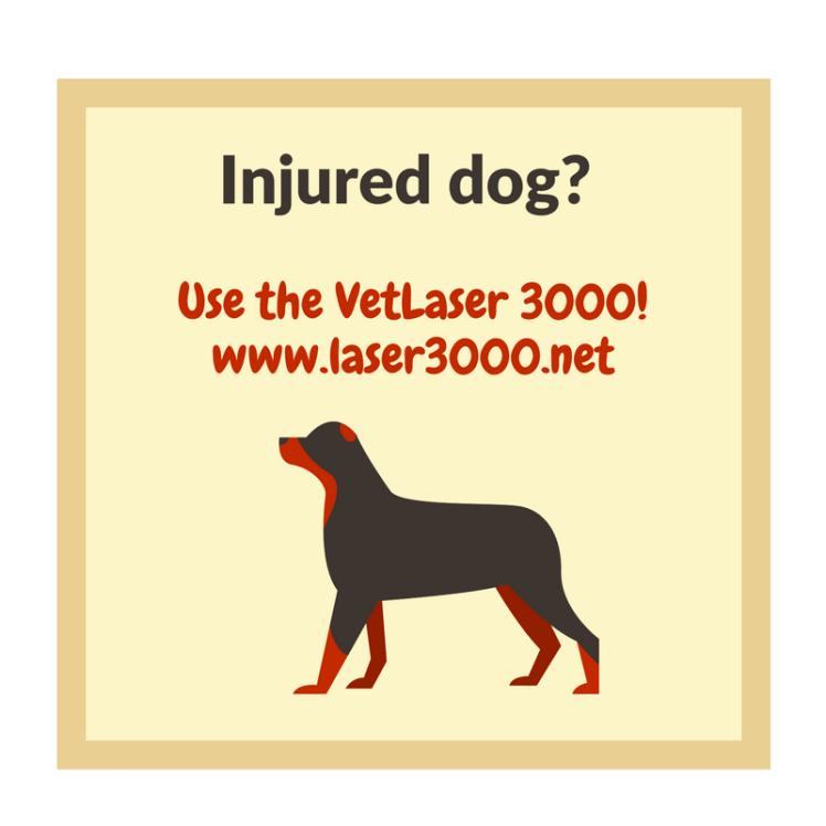 Dog Laser