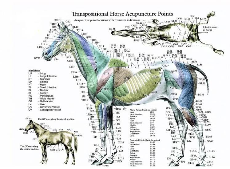 Horse 18.jpg