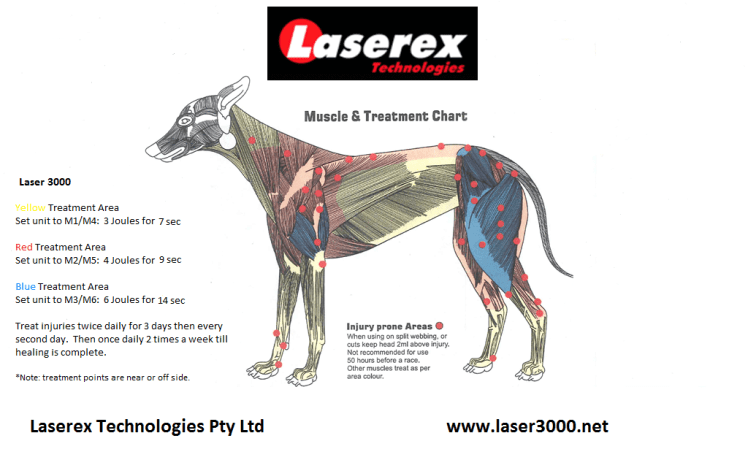 Greyhound Laser Therapy