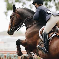 Equestrian laser