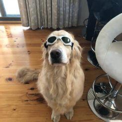 Dog wearing Doggles