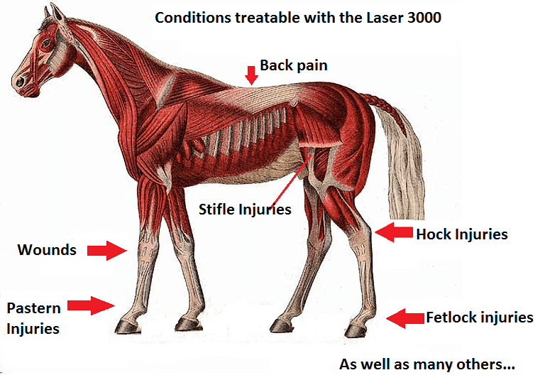 Horse chart 2015