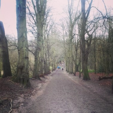 Hampstead Heath Walk