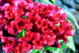 Flowers, India