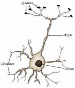 MySql fait travailler les neurones