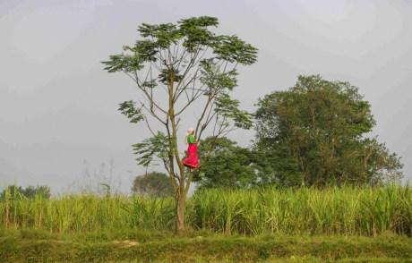 Vigilando al rinocerinte que está comiendo en la cosecha comunitaria, Bhadara