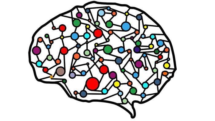 Estrato neural del cerebro