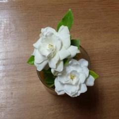 gardenias 03