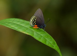 A beautiful butterfly, photographed at the lodge