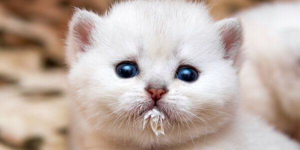 cuando abren ojos gatitos