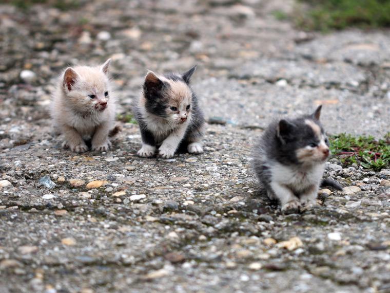 gatitos callejeros vagabundos