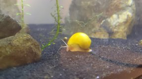 "Cullen Chase: ""My fish (and snails) should hopefully keep me company!"""