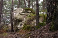 Fontainebleau forrest