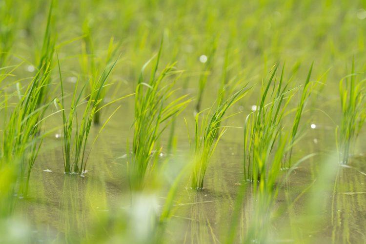 穀雨(こくう)− 二十四節気