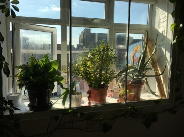 Lovely day, happy plants!