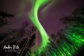 Another amazing aurora image by Amber Fite Photography in Fairbanks!