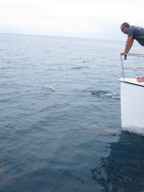 JR looking at dolphins