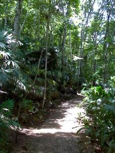 Semuc jungle trail