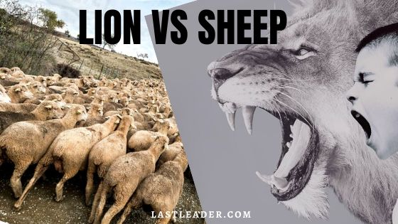 lion-vs-sheep-killer-motivation